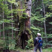 10_Beeindruckende_Märchenbäume_überall