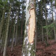 06_Ungeklärte_Baumschäden