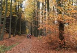 10-Goldener_Herbst