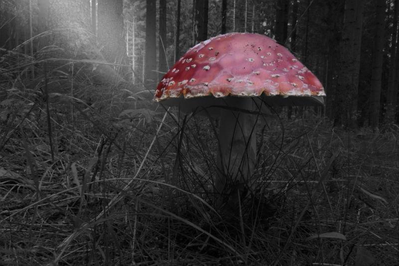 Bild32-Peter Wolf