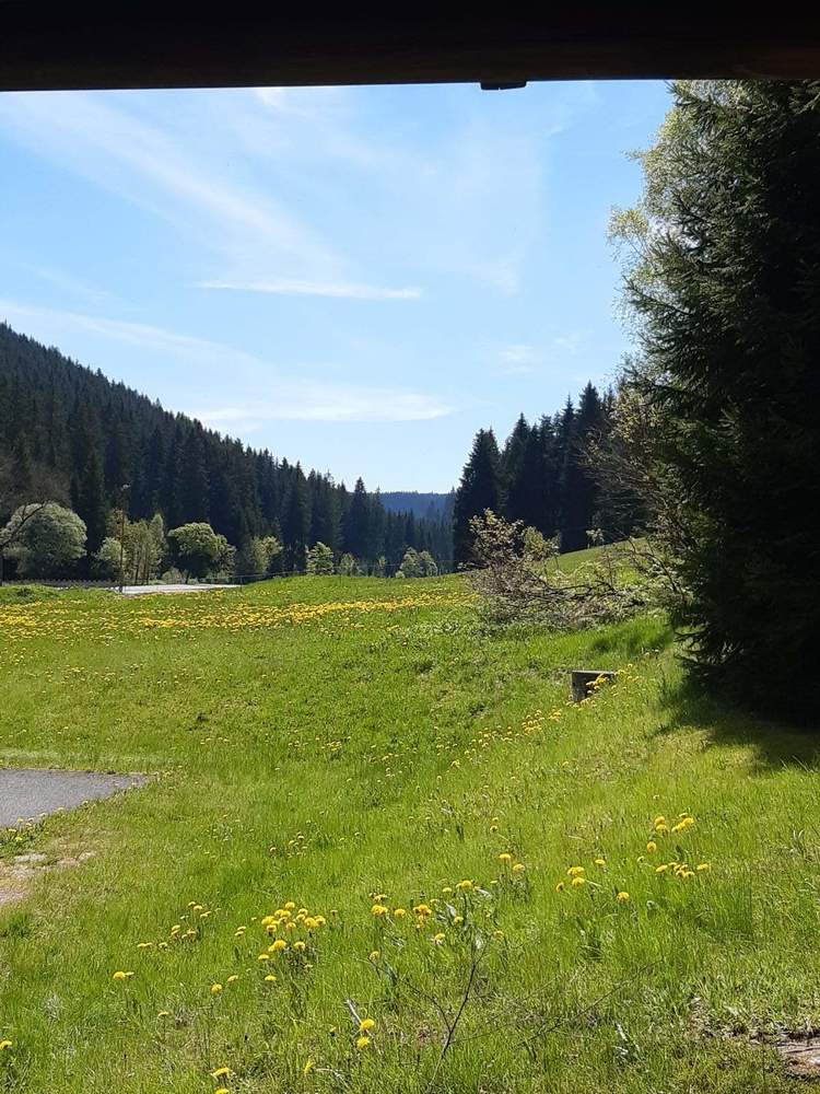 Bild03-Bergwiese
