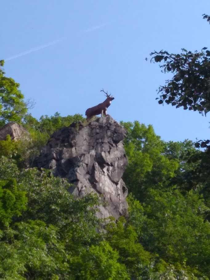 Bild_01-Hirsch_unterhalb_des_Schlosses