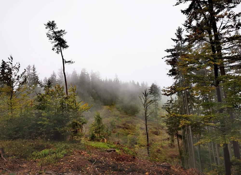 Bild05-Der_Kaiserwald_im_Nebel